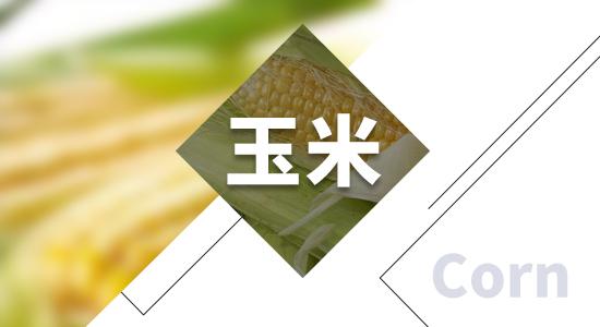海关总署:一季度我国进口玉米增加437.8%,进口大豆增加19%