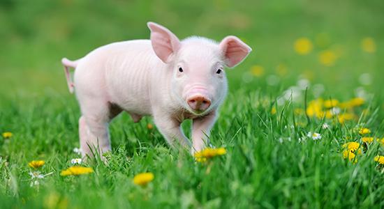 统计局:农业经济整体形势较好,秋粮播种面积明显扩大,高产作物玉米增加较多,猪肉产量增长38%