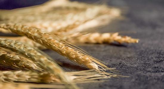 寒潮再现影响美多个冬小麦种植区 天气不确定增加促巴西玉米现货上涨